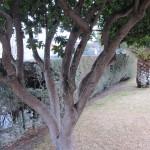 Conjunto de troncos y ramas.