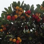 Gama de colores de los frutos