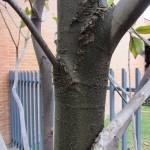 Detalle tronco y ramas.